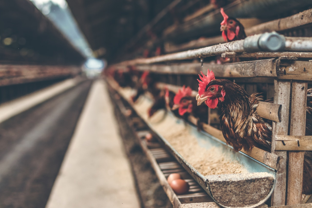 Difficulties of Agricultural Exporters - Poultry