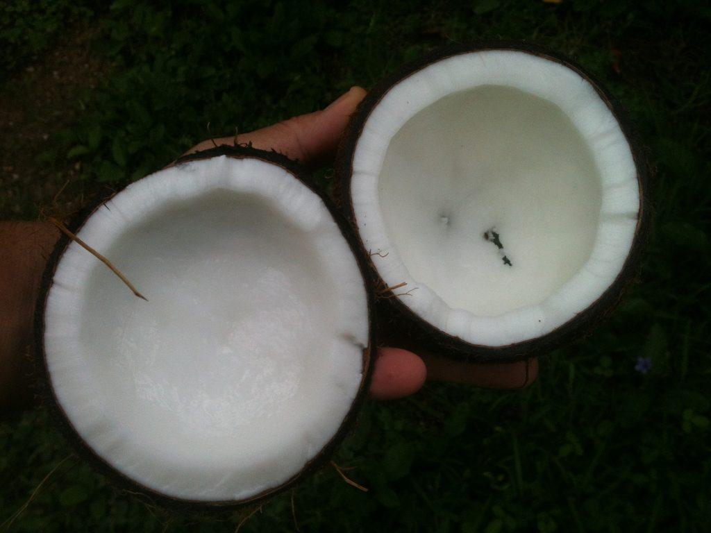 Origin of Coconut Oil