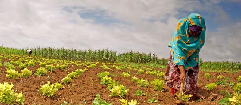 Import Sesame Seeds from Africa (Somalia)